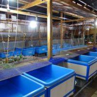 魚華園  水槽