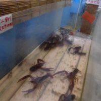 魚華園  ザリガニ釣り
