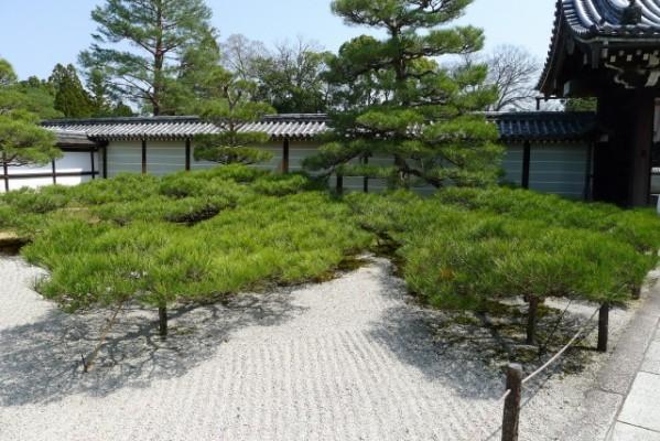 仁和寺 の松