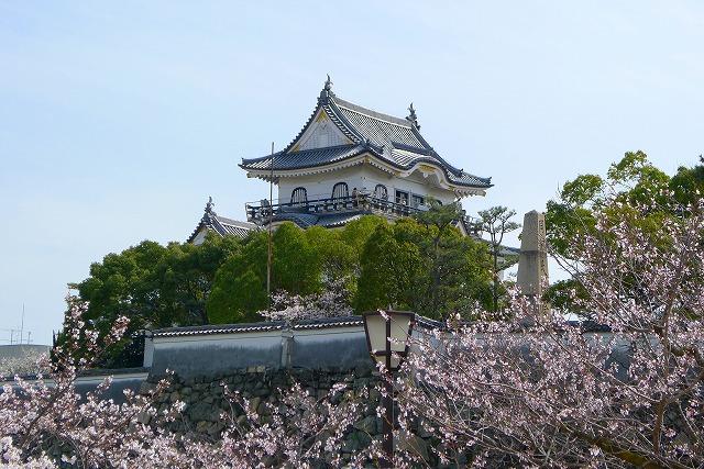 桜の名所 大阪 泉州 岸和田城の天守閣と桜2