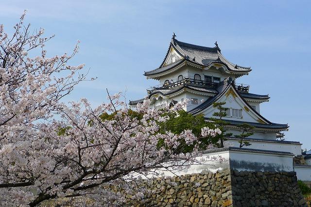 桜の名所 大阪 泉州 岸和田城の桜