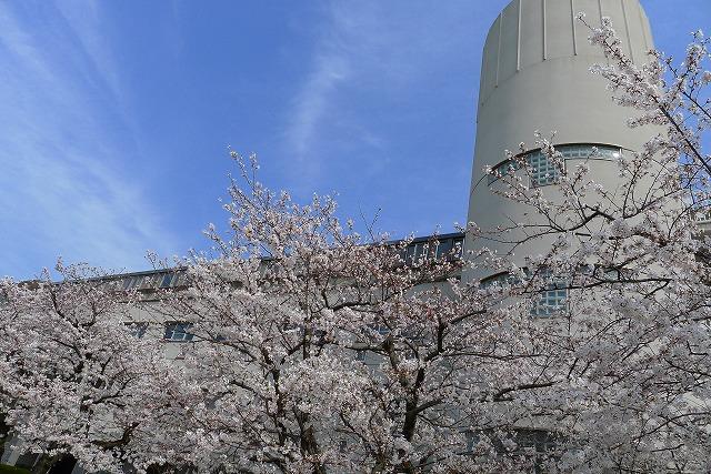 大阪府立 岸和田高校の校舎と桜