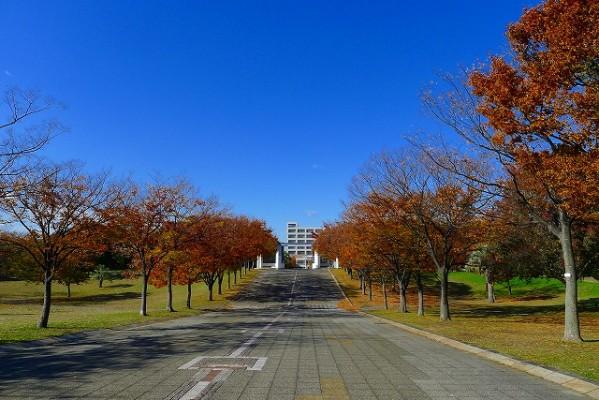 岸和田中央公園の正面道路