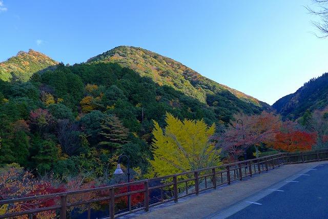 岸和田の紅葉の山
