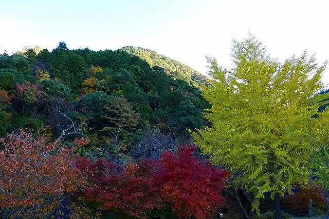 岸和田の山の紅葉