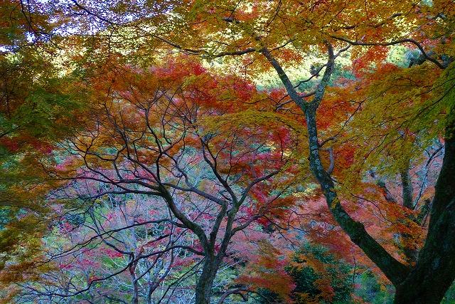 岸和田の癒される紅葉
