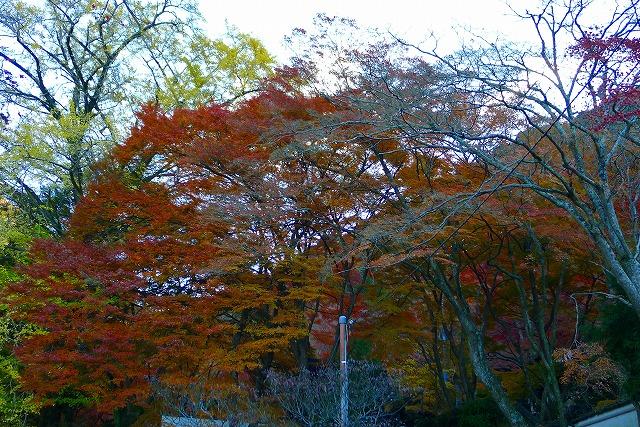 岸和田の秋の紅葉