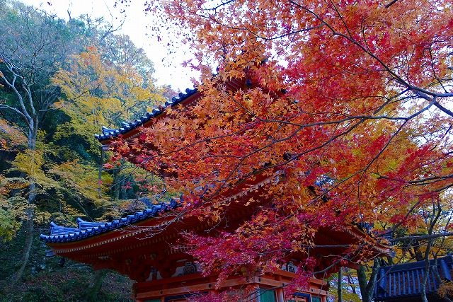 大威徳寺の多宝塔(国の重要文化財)と紅葉