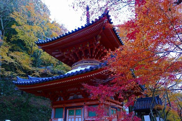大威徳寺の多宝塔(国の重要文化財)紅葉 2