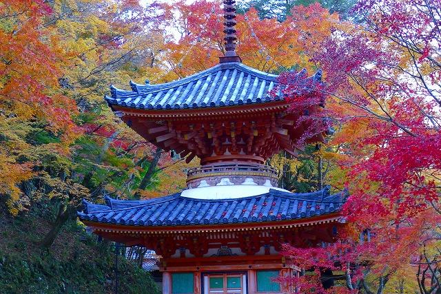 大威徳寺の多宝塔(国の重要文化財)紅葉