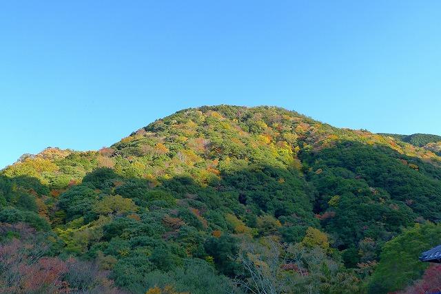 参道から見る山の紅葉
