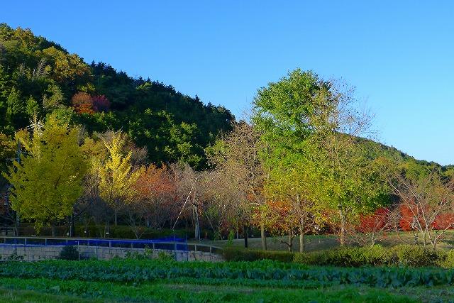 秋の岸和田大沢町