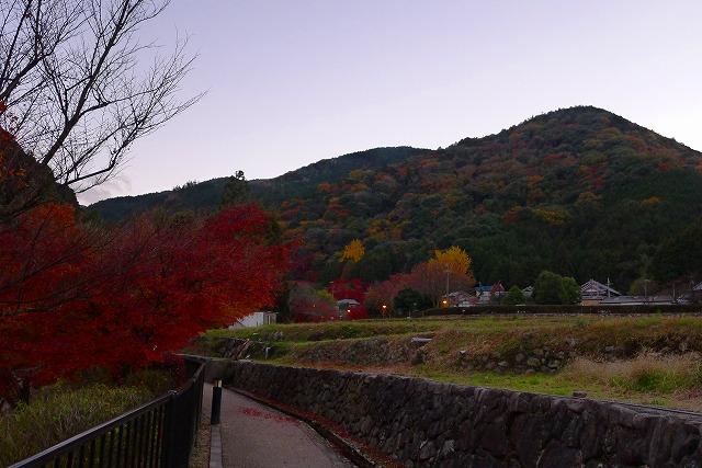 岸和田大沢町の夕暮れの紅葉