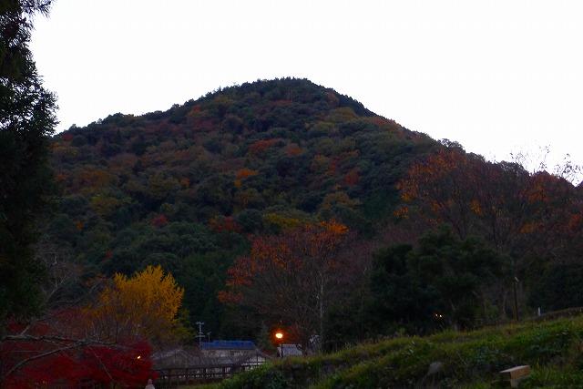 夕暮れの岸和田の山の紅葉