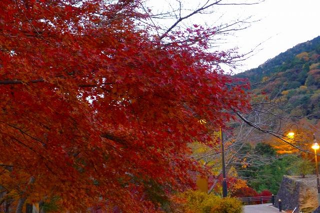 岸和田 大沢の夕暮れの紅葉(もみじ)と街路灯