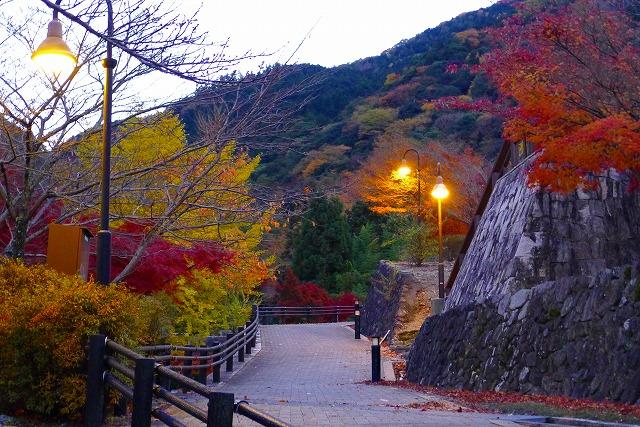 岸和田 いよやかの郷の遊歩道と夕暮れの紅葉(もみじ)と街路灯