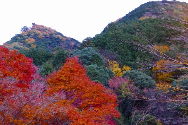 岸和田夕暮れの紅葉(もみじ)と山