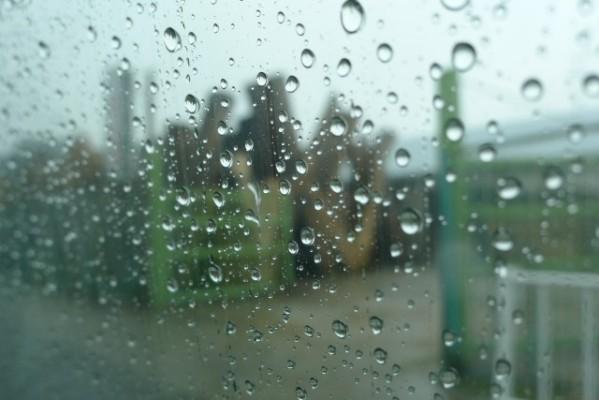 大阪泉州桐箪笥の田中家具の工房の桐材が雨に濡れる2