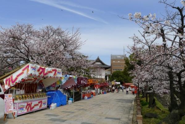 岸和田城の桜 7