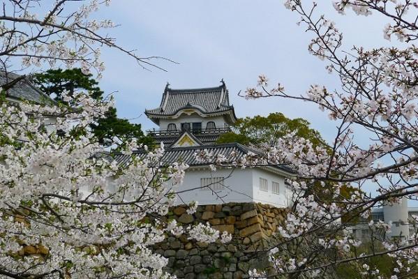 岸和田城の桜 2