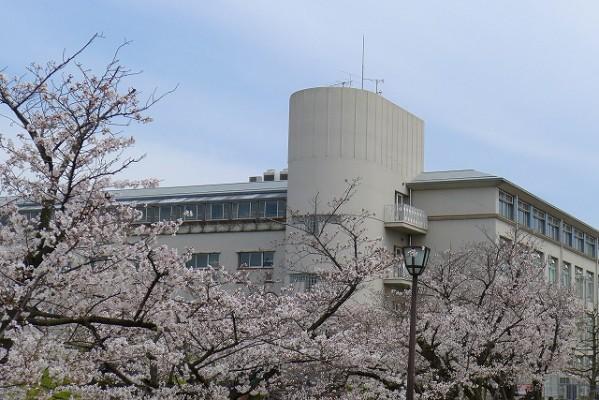 岸和田高校の桜