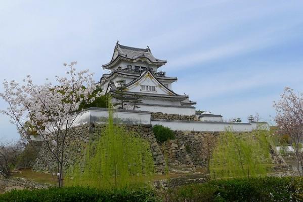 岸和田城の桜 4