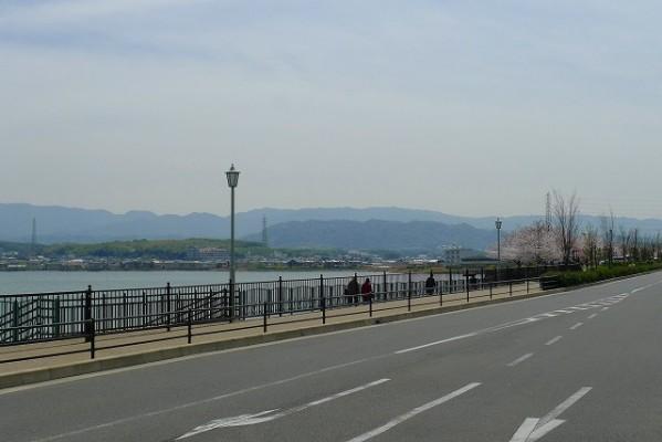 久米田池と桜並木