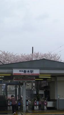 南海電車 春木駅駅舎と桜