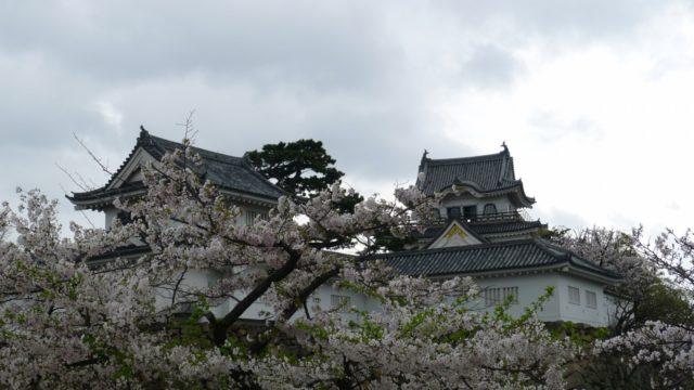 2015年 岸和田城の桜2