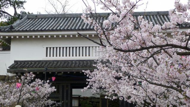 2015年 岸和田城の桜 3