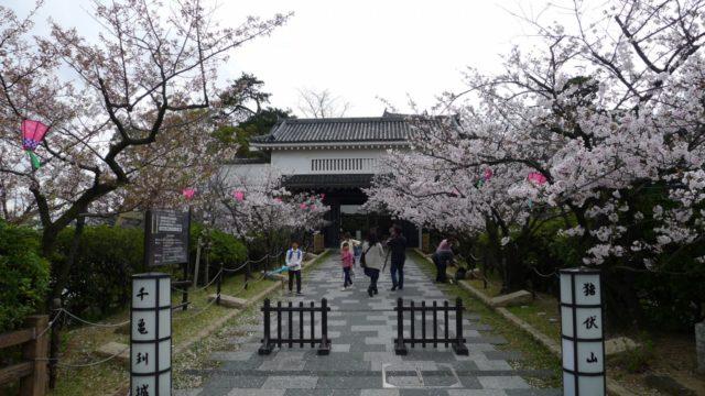 2015年 岸和田城の桜 14