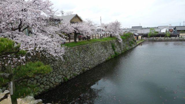 2015年 岸和田城のお濠の桜