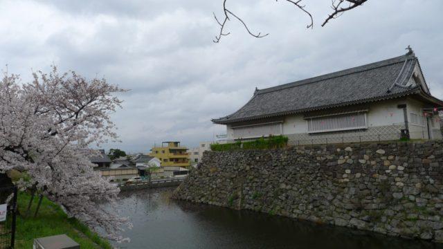 2015年 岸和田城の桜 20