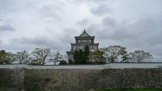 2015年 岸和田城の桜 21