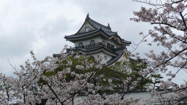 2015年 岸和田城の桜 26