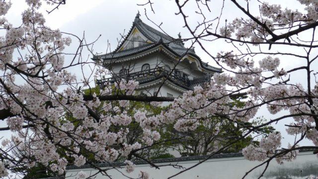 2015年 岸和田城の桜 27