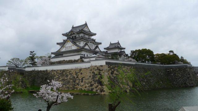 2015年 岸和田城の桜 29