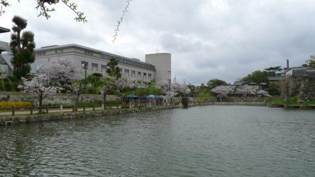 2015年 岸和田城の桜 と岸和田高校32