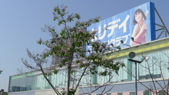 ホリディスポーツクラブの泉大津店の桐の木