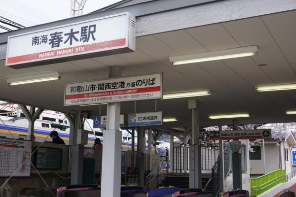 南海本線 春木駅の下り(和歌山方面)の桜