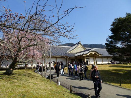 2017 醍醐寺しだれ桜と霊宝館