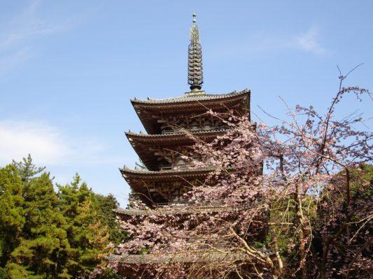 京都 醍醐寺のしだれ桜 と国宝 五重塔