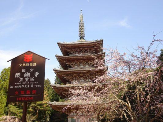 京都醍醐寺のしだれ桜 と国宝の五重塔