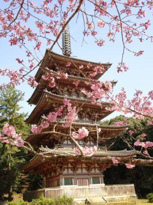醍醐寺の最古の五重塔と桜