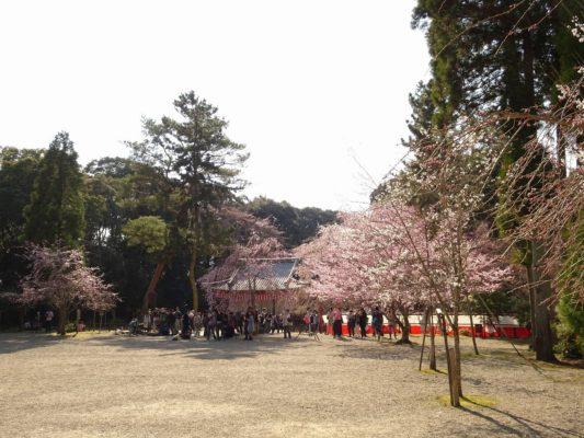 京都 醍醐寺の日月門と桜