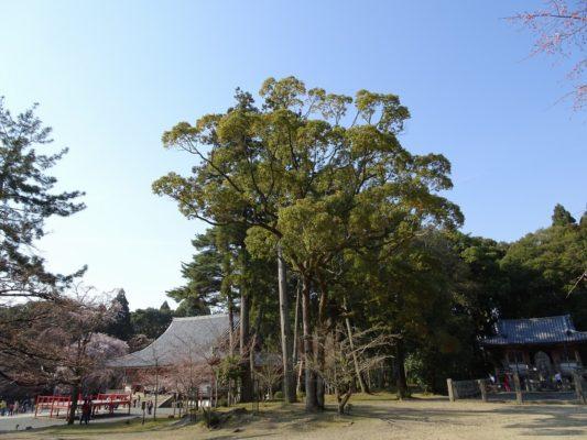 京都 醍醐寺の金堂
