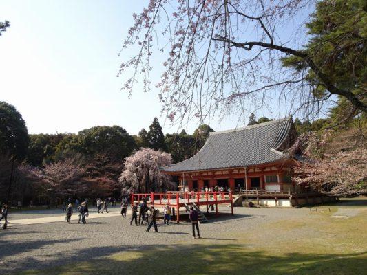 京都 醍醐寺の金堂としだれ桜