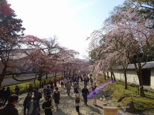 京都 醍醐寺の境内