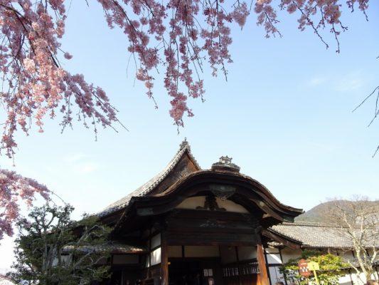 秀吉の三宝院としだれ桜の写真