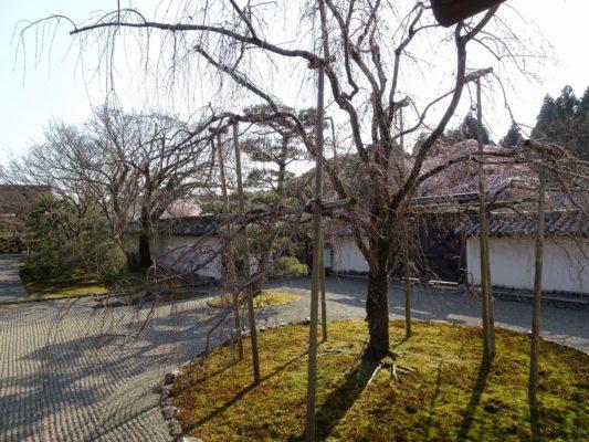 秀吉の三宝院の庭園とさくら